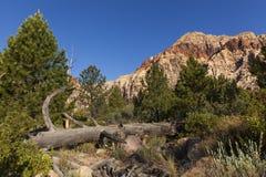 Landsape colorido del desierto con un árbol muerto caido. imagenes de archivo