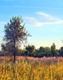 Landsape della natura Fotografia Stock