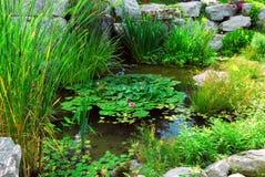 landsaping пруд Стоковые Фотографии RF