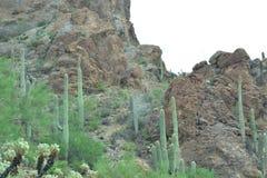 Landscap de cactus de désert Image stock
