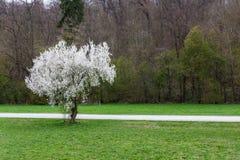 Landscap de florescência branco brilhante do sumário do campo do parque do contraste da árvore fotos de stock royalty free