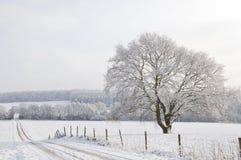 Landscap de l'hiver Photos libres de droits