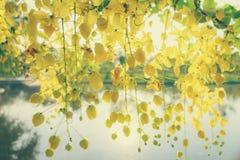 Landscap del fiore Fotografie Stock
