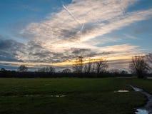 Landscap för blå himmel för öppen vanlig solnedgång för grässlättfältträd molnig arkivbild