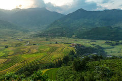 Landscap rice harvest.Mu cang chai,Yenbai,Vietnam. Stock Image