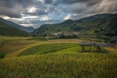 Landscap rice harvest.Mu cang chai,Yenbai,Vietnam. Stock Photography