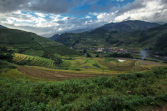 Landscap rice harvest.Mu cang chai,Yenbai,Vietnam. Stock Images