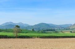 Landscap tropicale dell'azienda agricola di agricoltura del giacimento della canna da zucchero Fotografie Stock
