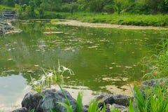 Landscape湖,森林,天空 免版税图库摄影