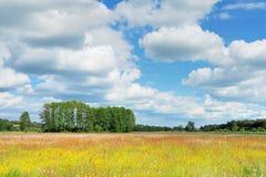 landscape весна стоковое фото