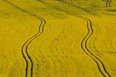 landscape весна Стоковое фото RF