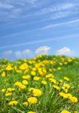 landscape весна стоковое изображение rf