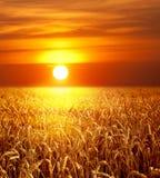 landscape заход солнца стоковое фото