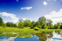 landscape лето стоковое изображение