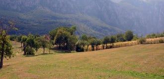 landscape одичалое Стоковая Фотография RF