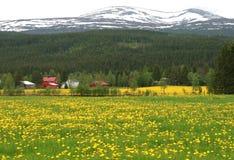 landscape сельское Стоковое Фото