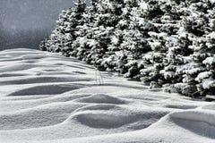 landscape снежное Стоковые Фотографии RF