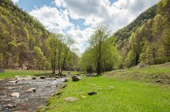 landscape сочная естественная сценарная вегетация Стоковая Фотография