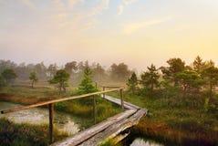 landscape сценарное Стоковое фото RF