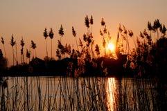 landscape тростник Стоковое Изображение RF
