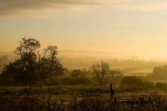 landscape туманное утро Стоковые Изображения