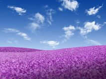 Landscape 1. Landscape - meadow full of violet flowers over blue sky with white clouds Royalty Free Stock Image