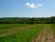 Landscape....(1). Here is a land of green wheat under a blue sky Stock Photo