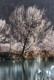 Landscape湖 图库摄影