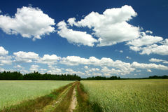 Landscape. Dirt road in the country side on a sunny day Royalty Free Stock Image