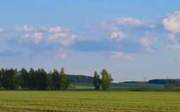 Landscape. Calm landscape of field with beautiful sky Stock Photography
