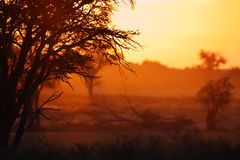 Landscape. Sunrise in the open plains of the kalahari desert Royalty Free Stock Images