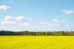 Landscape. Yellow field in the country Stock Photography