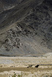 Landscape. Beautiful landscape in tibet, china Royalty Free Stock Images