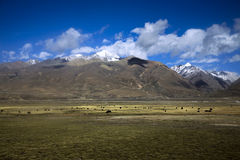 Landscape. Beautiful landscape in tibet, china Royalty Free Stock Photography