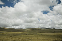 Landscape. Beautiful landscape in tibet, china Royalty Free Stock Image