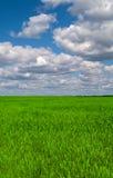 Landscape. Beautiful landscape, green grass, blue sky Royalty Free Stock Photos
