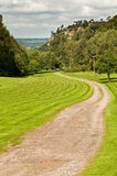 Landscape. A landscape in the summer Stock Photography