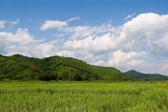 Landscape. Fine landscape in a sunny day Stock Image