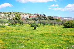 Landscape. Cyprus landscape, cloudy sky,field with yellow daisies,trees,houses Royalty Free Stock Images