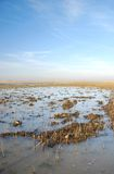 Landscape 14. Field under water in winter Royalty Free Stock Image