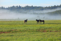 Landscape. Spring Farmland Nearby Yellowstone National Park, USA royalty free stock image