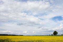 Landscape. Nature background. Summer landscape with yellow and cloudy sky stock photos