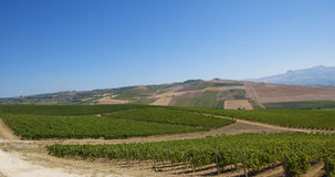 Landscape. Beautiful Vineyard Landscape in italy Stock Photography