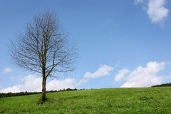 Landscape. Lonely dry tree on green filed, the blue sky Royalty Free Stock Photo
