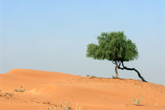 Landscape. A view of a lone tree growing in the desert Royalty Free Stock Images