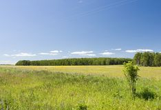 Landscape. Summer landscape Royalty Free Stock Photography