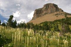 Landscape. Beautiful landscape, Yellowstone National Park, United States Royalty Free Stock Image