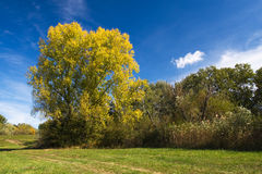 Landscape. In autumn (green, grass, blue cloudy sky Stock Photo