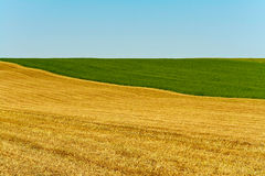 Landscape. Simple field landscape consisting only 3 colors yellow, green and light blue Royalty Free Stock Image