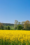 Landscape. This image shows a landscape in spring with colza filed royalty free stock image